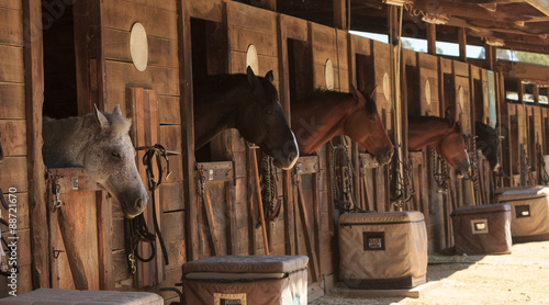Louisville, Kentucky, United States, — July 2015: Brown bay horse view out the stable in a barn - 88721670