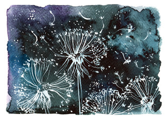 flying white dandelions on a black background/ watercolor illustration