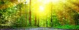 Fototapety Wald im Licht
