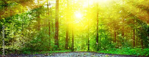 Wald im Licht - 88745261