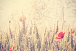 Retro vintage filtered wild meadow with poppy flowers at sunrise - 88803885