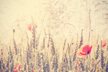 Retro vintage filtered wild meadow with poppy flowers at sunrise