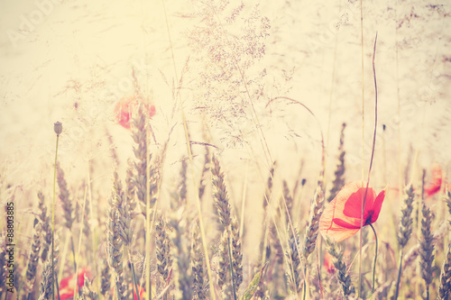 Panel Szklany Retro vintage filtered wild meadow with poppy flowers at sunrise
