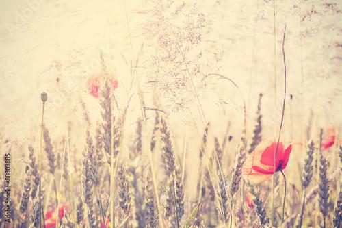 Naklejka Retro vintage filtered wild meadow with poppy flowers at sunrise