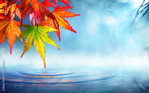 zen autumn - red maple leaves on pond