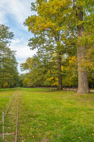 Fototapety, obrazy : Landscape Bialowieza Forest
