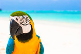 Fototapety Adorable bright colorful parrot on the white sand in the