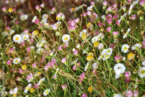 Papiers peints Azalea Flowers field background