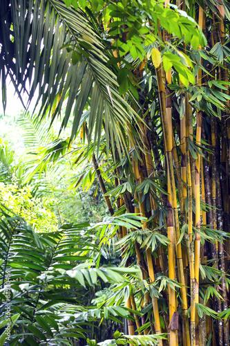 bambusowy-gaj-w-dzunglach-filipin
