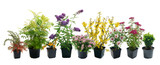 Shrubs in containers on a white background - 89018882
