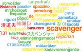 Scavenger multilanguage wordcloud background concept poster