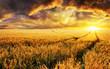 Sonnenuntergang auf Feld, Fokus auf Vordergrund