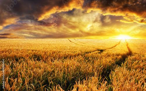Foto op Aluminium Diepbruine Sonnenuntergang auf Feld, Fokus auf Vordergrund