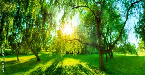 Panorama of green summer park. Sun shining through trees, leaves.