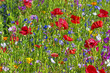 summer meadow with red poppies - 89119025