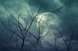 Fototapety Spooky forest with full moon, dead trees, Halloween background