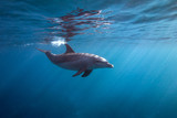 Surface dolphin