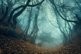 Fototapety Trail through a mysterious dark old forest in fog. Autumn
