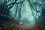 Trail through a mysterious dark old forest in fog. Autumn - Fine Art prints