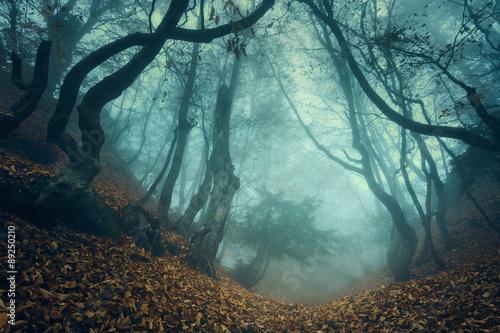 szlak-przez-tajemniczy-ciemny-stary-las-we-mgle