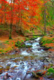 Fototapety rapid mountain river in autumn
