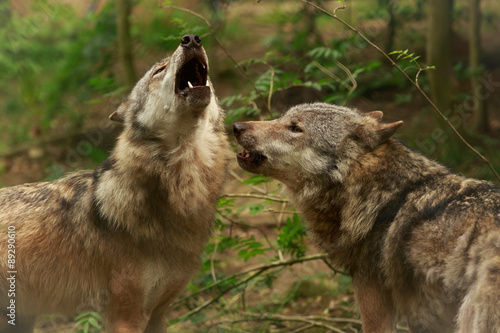 Aluminium Wolf Heulende Wölfe