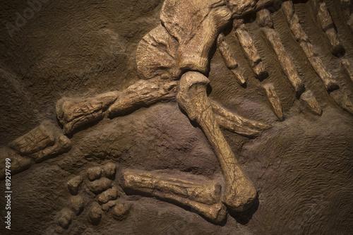 Poster Dinosaur fossil