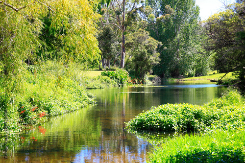 Amazing sunny scenery with water and greenery. Poster