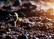 Постер, плакат: Green seedlings in new life and water