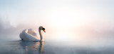 Art beautiful landscape with a swan floating on the lake - 89344442