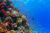 Underwater coral reef - 89362676
