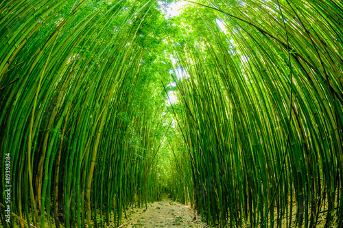 Path through a bamboo forrest on Maui, Hawaii, USA