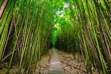 A wooden path through a dense bamboo forest, Maui, Hawaii, USA © Don Landwehrle
