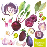 Watercolor vegetables and herbs. Provencal style. Recent watercolor paintings of organic food. Beet, cabbage, bay leaf, garlic, radishes, onions