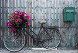 Fototapety old vintage bicycle with flower basket