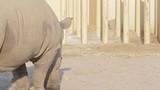Rhino in the aviary. poster