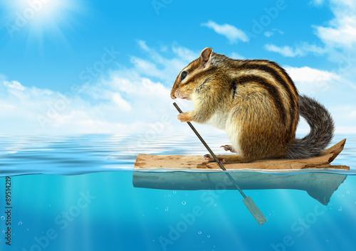 Poster Funny animal, chipmunk floating at ocean, travel concept