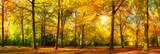 Fototapety Herbst Wald Panorama im goldenen Sonnenschein