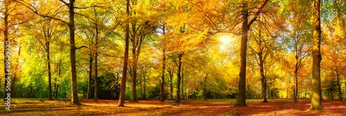 Fotografiet Herbst Wald Panorama im goldenen Sonnenschein