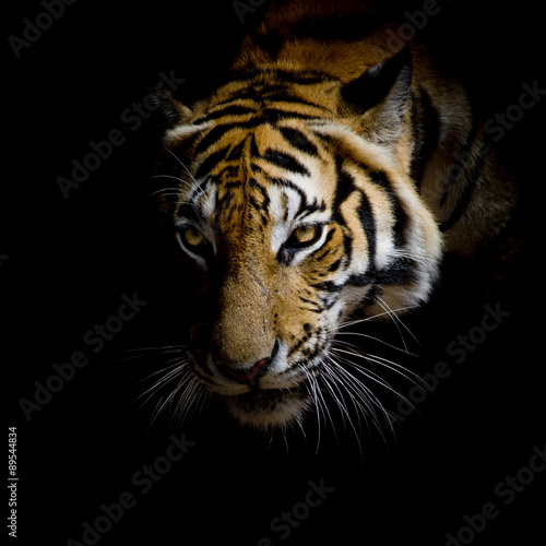 Fotobehang Luipaard close up face tiger isolated on black background