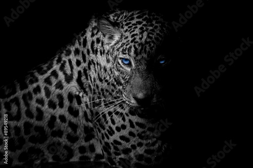 black & white Leopard portrait isolate on black background