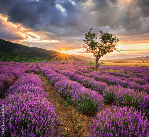 Canvas Zalm Stunning landscape with lavender field at sunrise