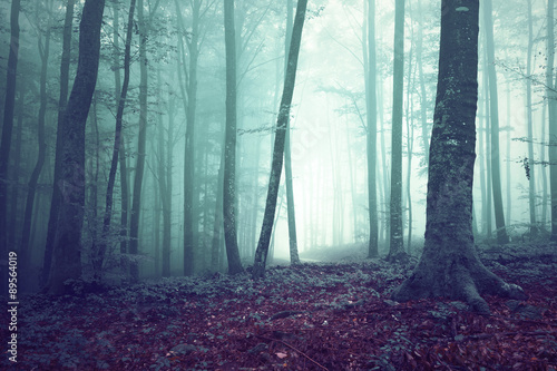 Dreamy green and blue colored foggy forest tree background. Fantasy colored woodland. Color filter effect used.