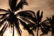 Silhouette of palm trees on Maui, Hawaii, USA