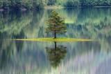 Fototapety Sapin se reflétant dans un lac en Norvège
