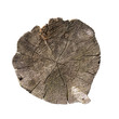 weathered tree trunk cross section, isolated on white, clipping path included