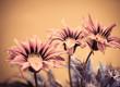 summer flowers closeup
