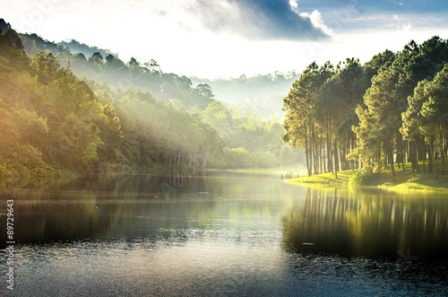 pang ung , reflection of pine tree in a lake - 89729643