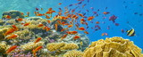 Fototapety Underwater view at coral reef and fishes, Dahab, Red Sea, Egypt