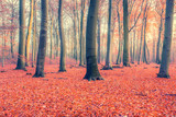 Fototapety Colorful autumn forest